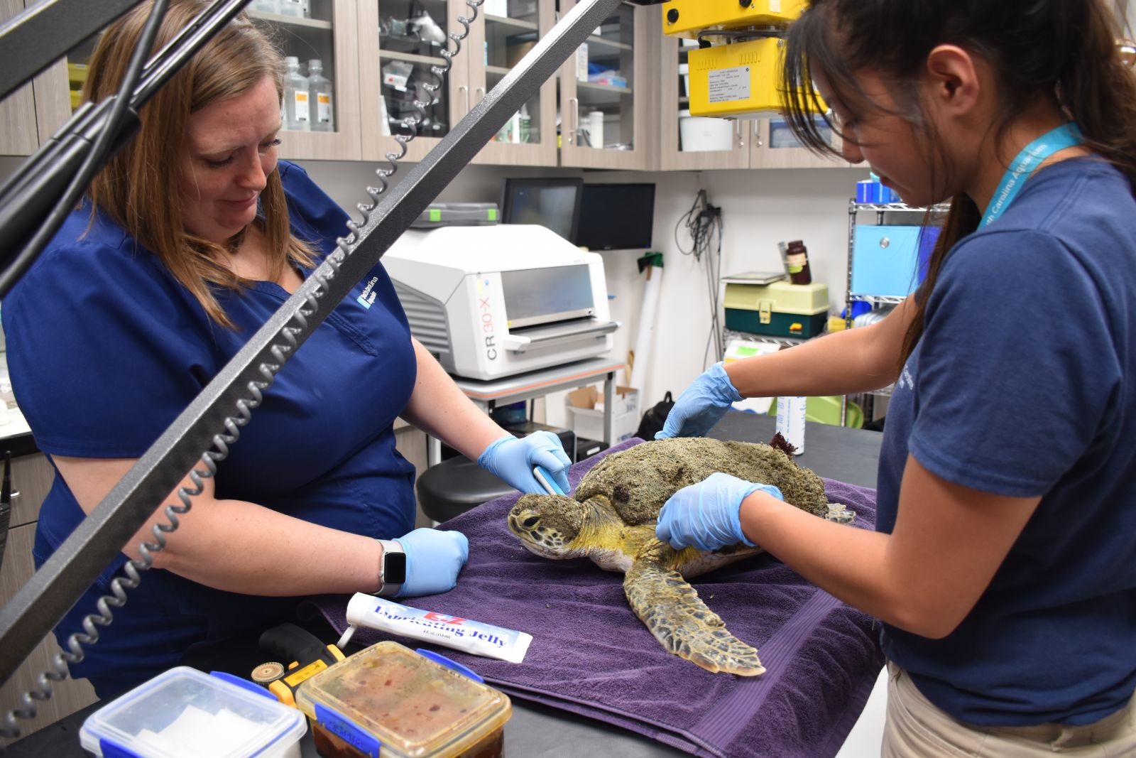 Whitney Daniel, left, veterinary assistant and Alexis Ybarra, sea turtle volunteer, tending to Aardvark at the S.C. Aquarium Sea Turtle Care Center in downtown Charleston. (Photo/Provided)