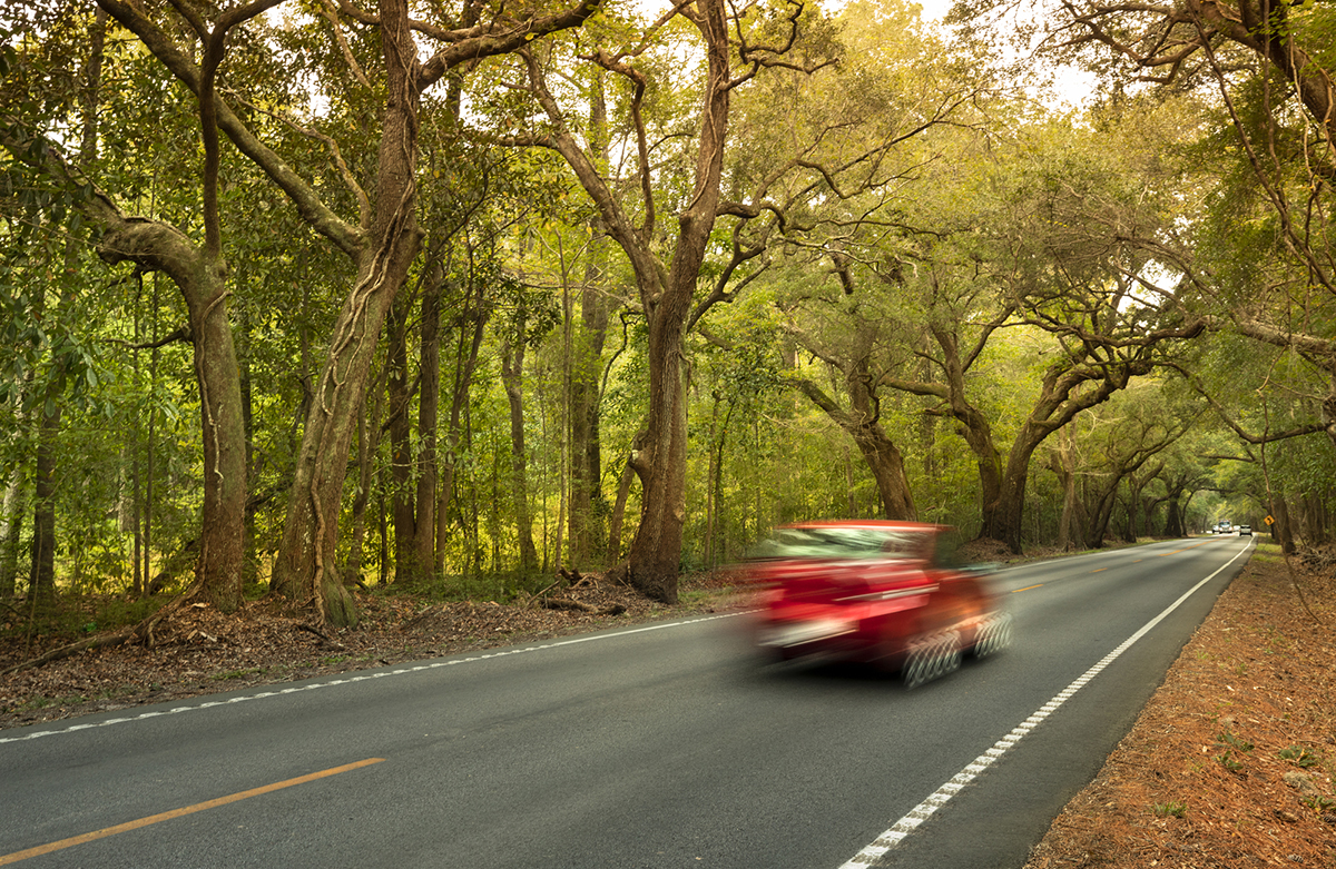 Ashley River Road, one of the oldest thoroughfares in South Carolina, is also considered the most scenic drive in the state. (Photo/File)